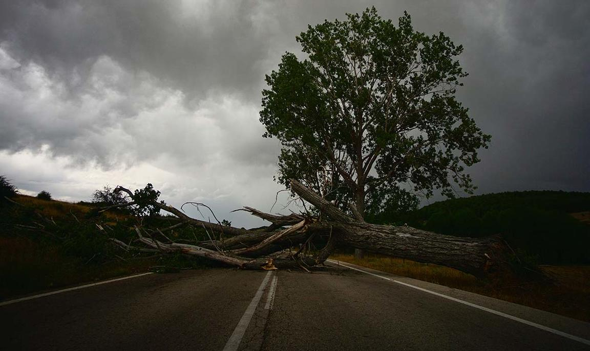 Image of a fallen tree blocking a road